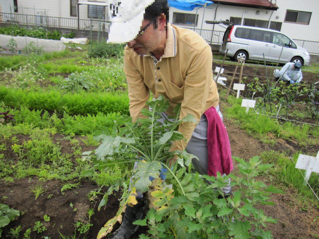 農園プログラム