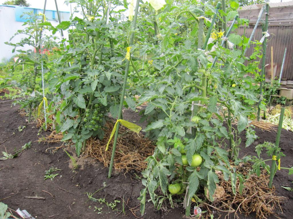 就労訓練-農園プログラム