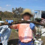 就労支援の農業訓練プログラムの様子